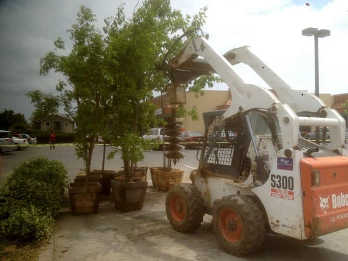 trees and shrubs removal