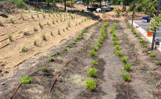 soil erosion fix